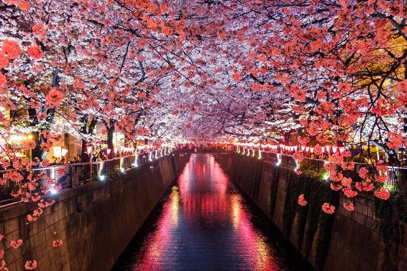 川と花の画像