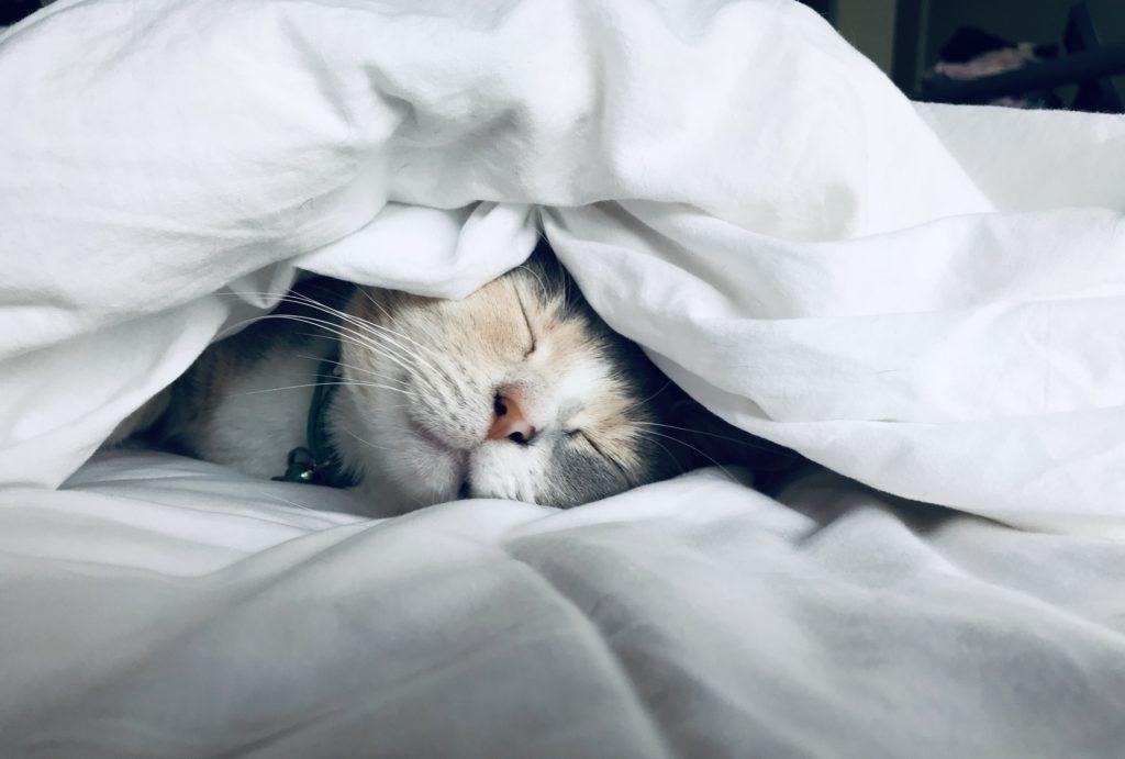 寝ている猫の画像